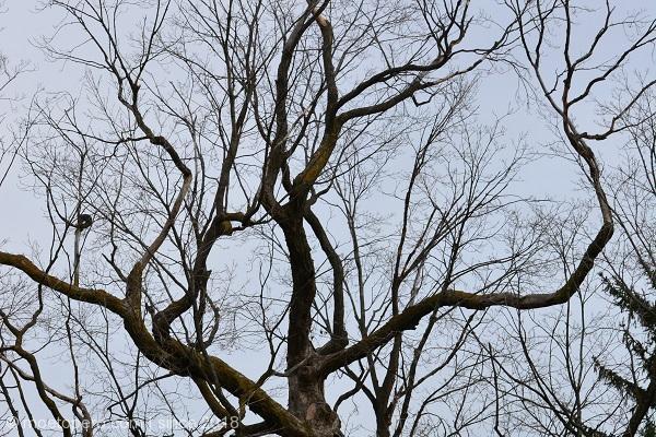 moetopero.com-tree